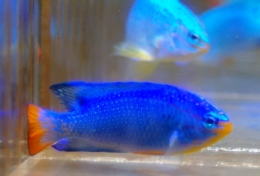 220390 260 - Hot New Items at A&M Aquatics